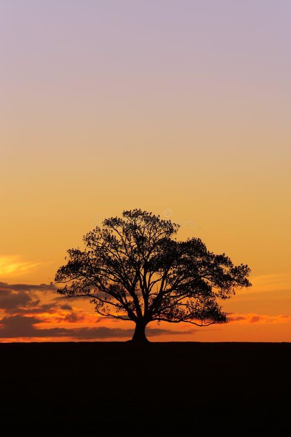 Sonnenuntergang-Baum-Schattenbild 2 lizenzfreie stockfotografie
