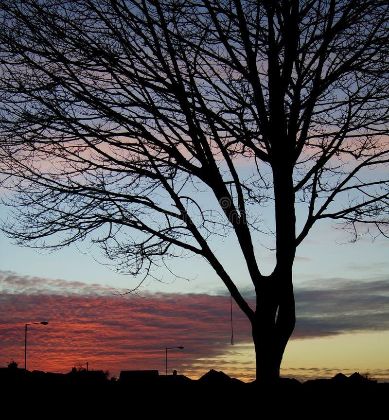 Sonnenuntergang-Baum-Schattenbild 3 stockfotos