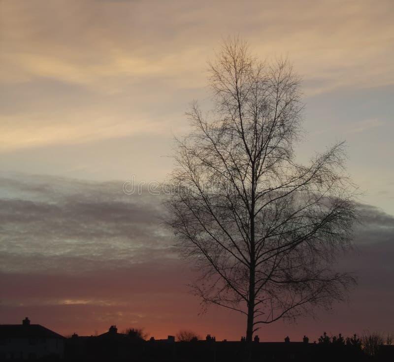 Sonnenuntergang-Baum-Schattenbild 5 lizenzfreies stockbild
