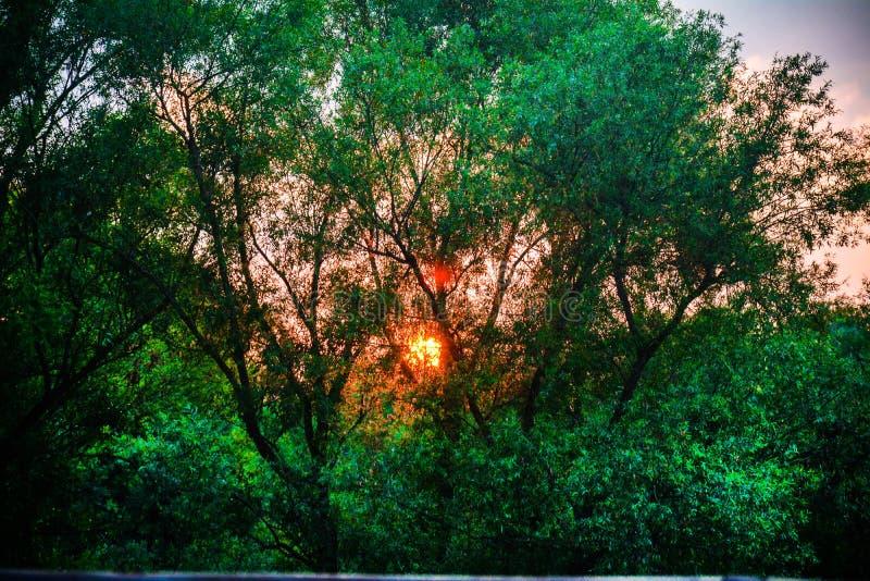 Sonnenuntergang bei Gorica Podgorica stockbilder