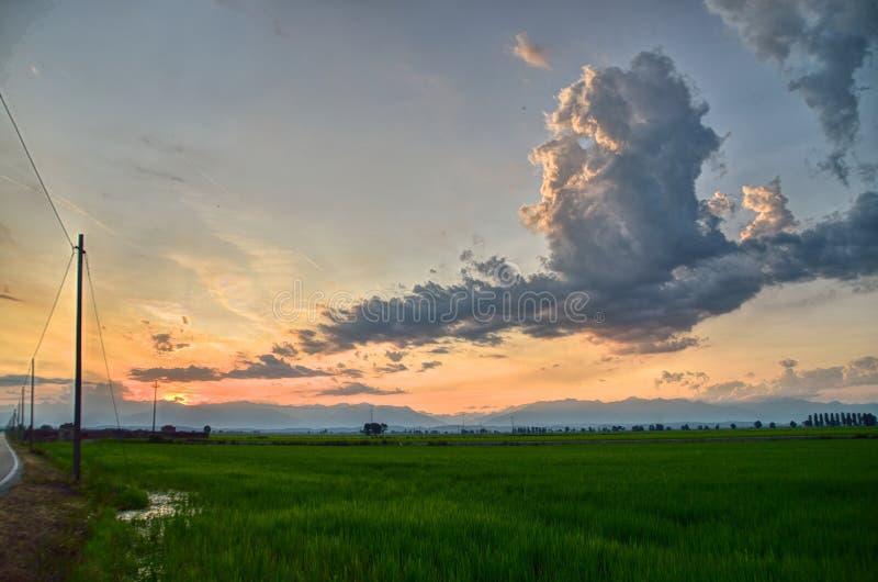 Sonnenuntergang ?ber den Reisfeldern lizenzfreie stockfotografie