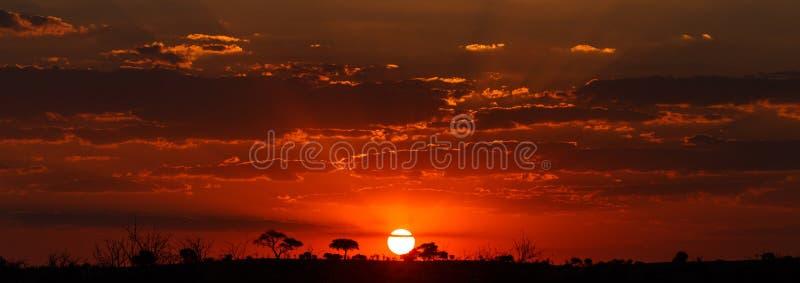 Sonnenuntergang - Chobe N P Botswana, Afrika stockfotografie