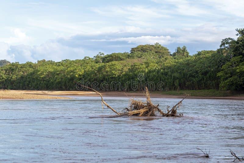 Sonnenuntergang an den Beni-Flussklippen, Abenteuer in den Dschungeln Nationalparks Madidi, der Amazonas-Becken in Bolivien, Süda lizenzfreie stockfotos