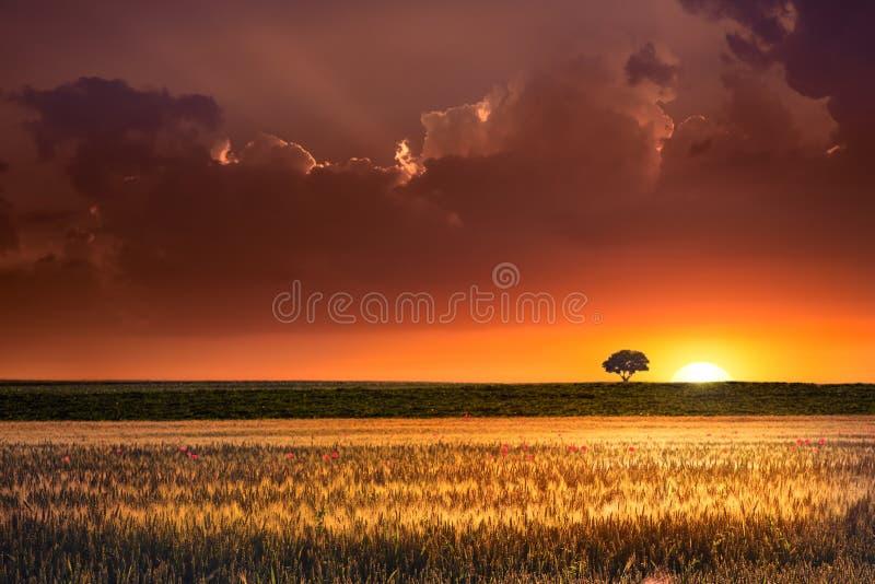 Sonnenuntergang in den landwirtschaftlichen Nutzflächen lizenzfreies stockbild