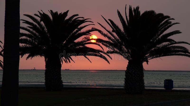 Sonnenuntergang in den Palmen lizenzfreies stockbild