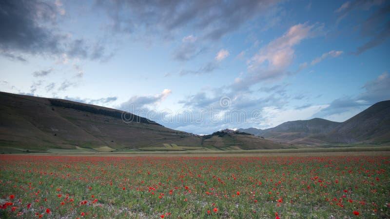 Sonnenuntergang in der Naturlandschaft der Ebene von Castelluccio di Norcia Apennines, Umbrien, Italien lizenzfreie stockfotografie