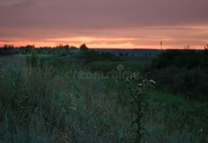 Sonnenuntergang in der Rostow-Steppe stockbild