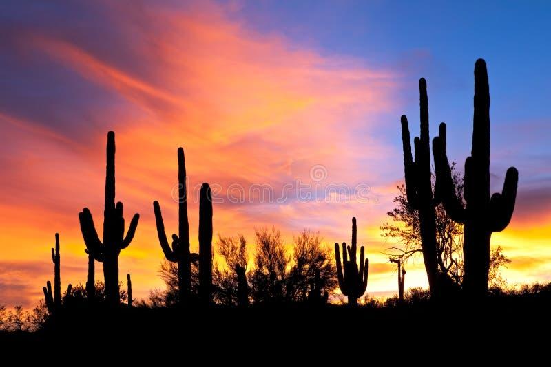 Sonnenuntergang in der Wüste. stockfotografie