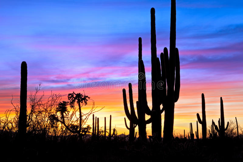 Sonnenuntergang in der Wüste. lizenzfreie stockfotografie