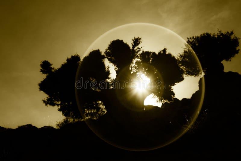 Sonnenuntergang durch Baum in der Wüste lizenzfreie stockfotografie