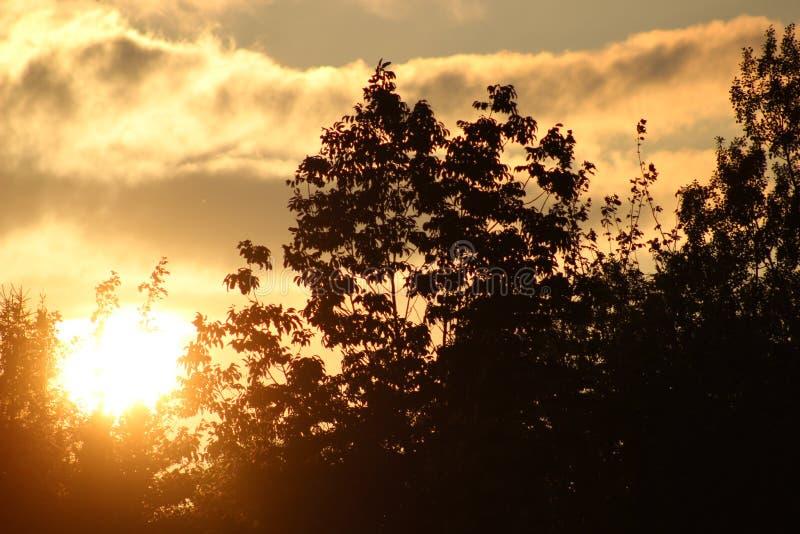 Sonnenuntergang durch die Bäume lizenzfreie stockfotos