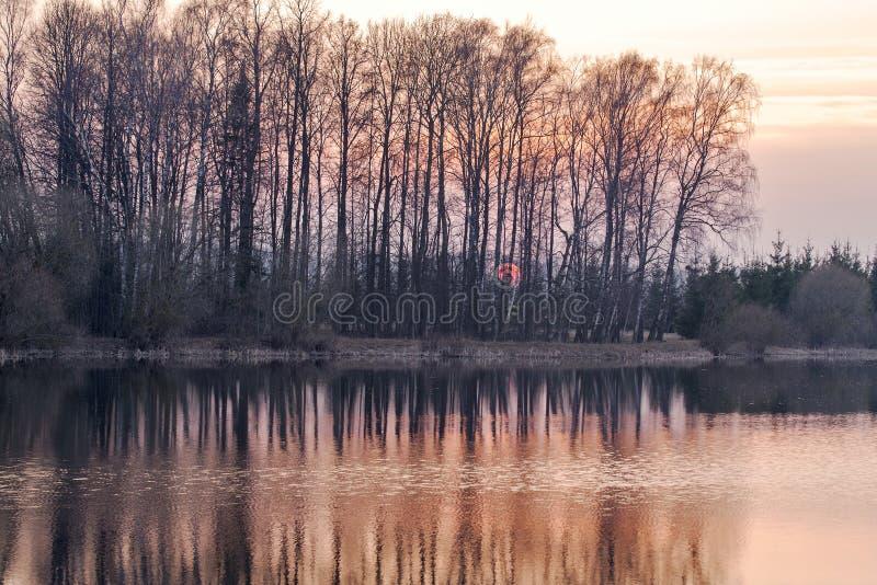 Sonnenuntergang durch die Bäume nahe dem See stockbilder