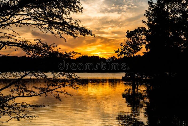 Sonnenuntergang durch kahle Zypresse-Bäume am gedrungenen See stockbild