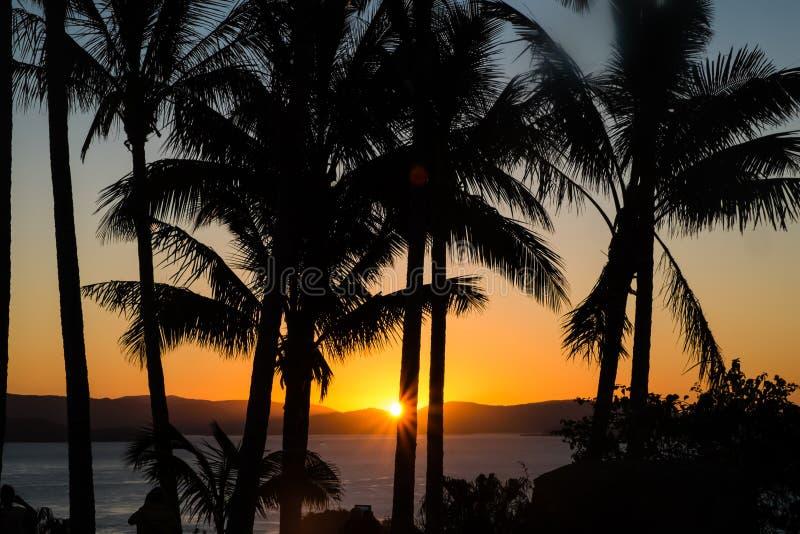 Sonnenuntergang durch Palmen, Hamilton Island, Queensland, Australien lizenzfreie stockfotos