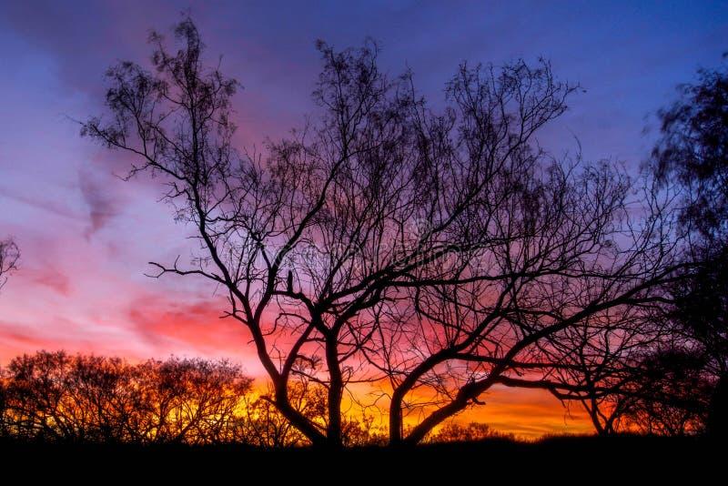 Sonnenuntergang durch Schattenbildbäume stockfotos