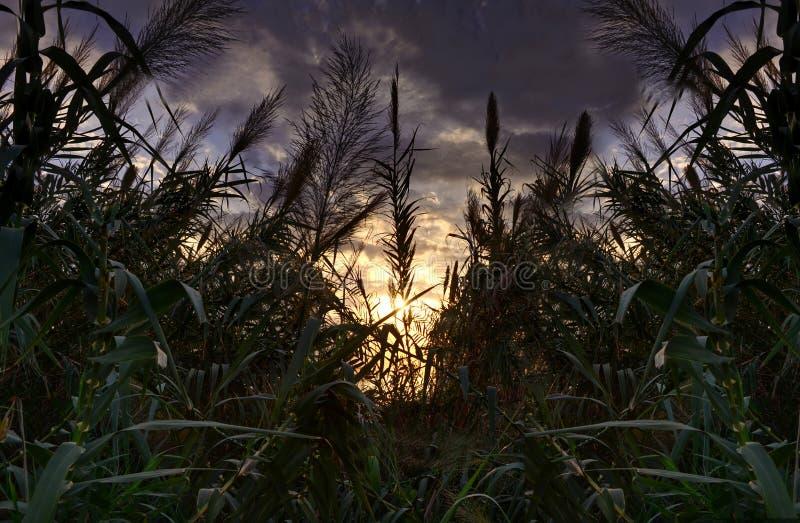 Sonnenuntergang an einem düsteren Tag stockbilder
