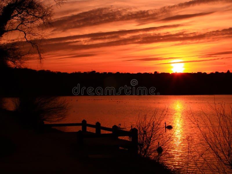 Sonnenuntergang in einem gelb-orangeen Zebrahimmel mit einem Wald im Hintergrund über einem Teich lizenzfreie stockfotografie