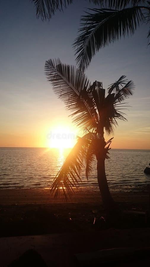 Sonnenuntergang in einem palmtree stockbild