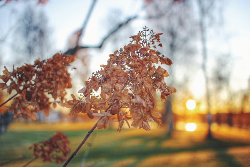 Sonnenuntergang in einem Park im Herbst lizenzfreies stockbild