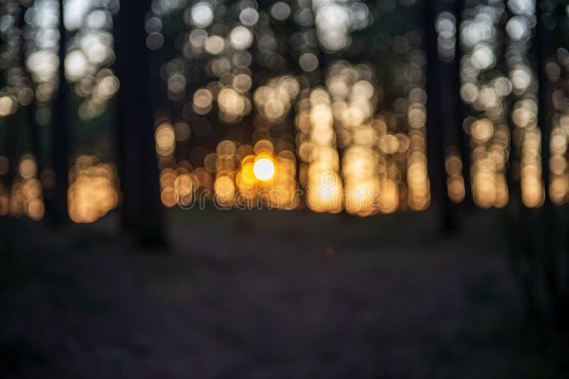 Sonnenuntergang hinter Bäumen mit Linsenunschärfeeffekt lizenzfreie stockfotografie