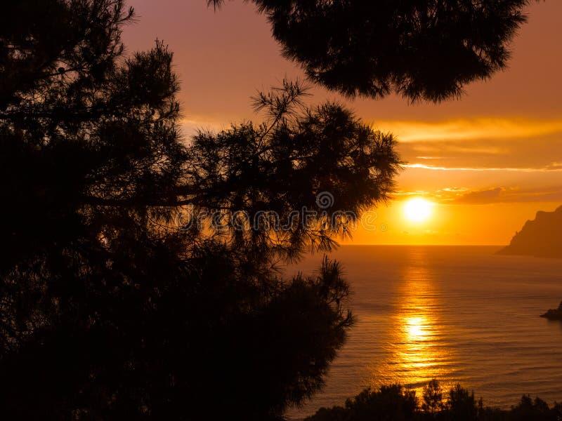 Sonnenuntergang hinter den Bäumen stockfotografie