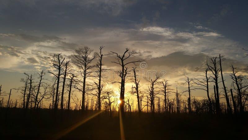 Sonnenuntergang hinter den Bäumen stockfotos