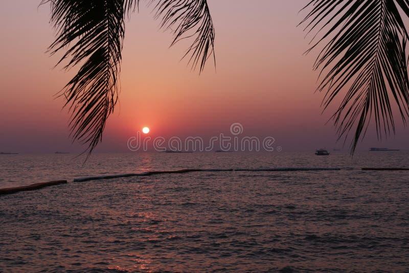 Sonnenuntergang hinter Kokosnussblättern lizenzfreies stockfoto