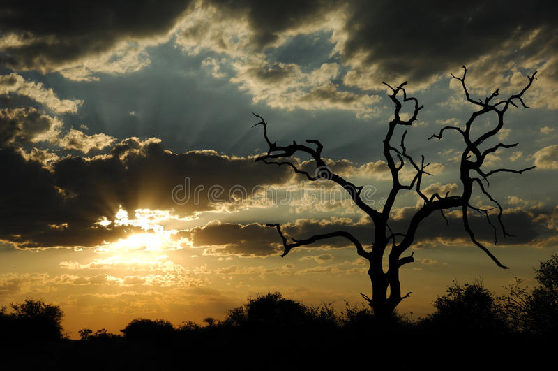 Sonnenuntergang im afrikanischen Busch (Südafrika) lizenzfreie stockfotos