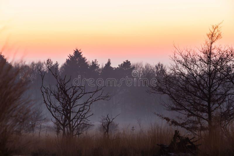 Sonnenuntergang im Forrest lizenzfreies stockfoto