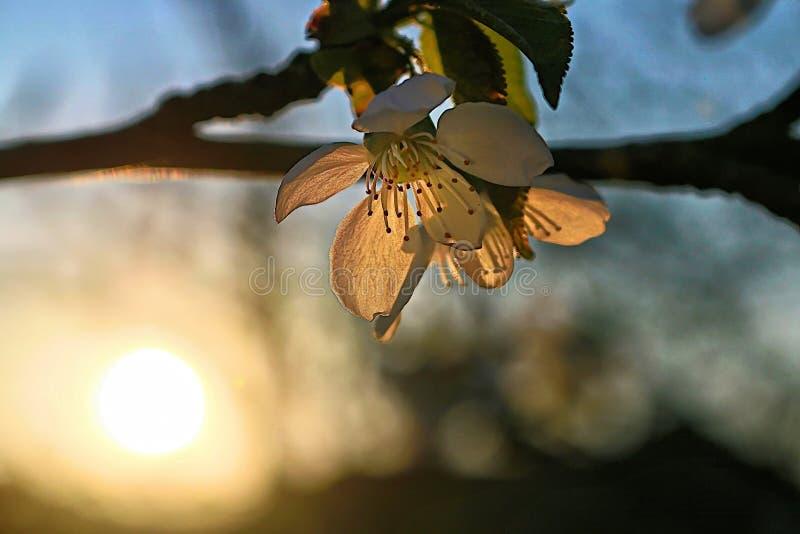 Sonnenuntergang im Garten stockfoto