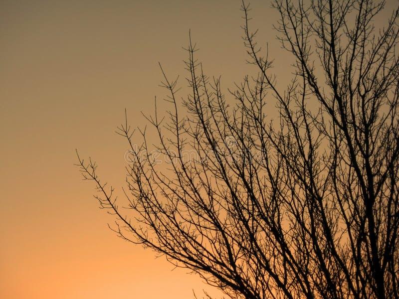 Sonnenuntergang im Hafenobstgarten Washington lizenzfreie stockfotografie