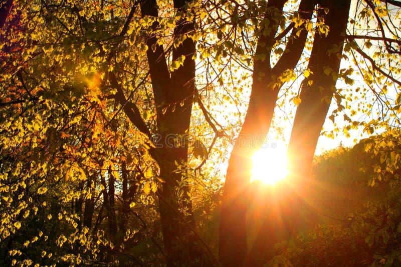 Sonnenuntergang im Herbstwaldschönen Jahreszeit-Hintergrund stockbild