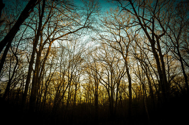 Sonnenuntergang im Holz lizenzfreies stockbild