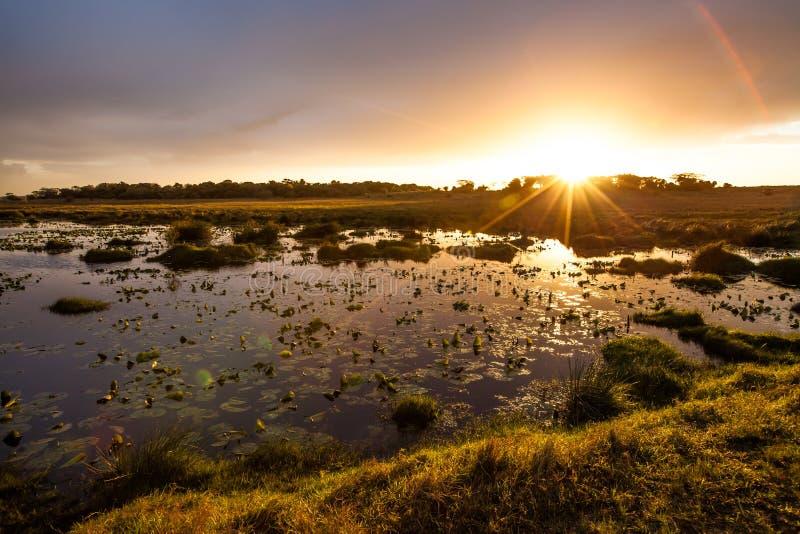 Sonnenuntergang im iSimangaliso Sumpfgebiet-Park stockbild