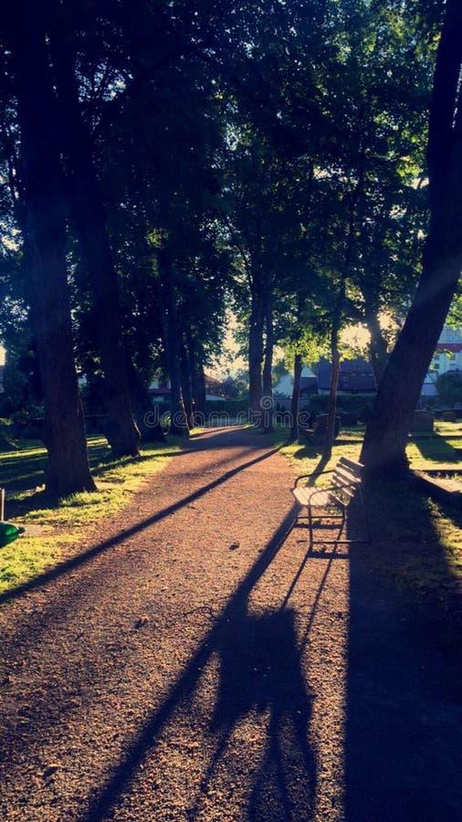 Sonnenuntergang im Park stockfoto