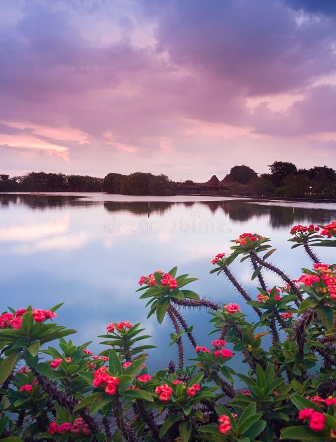 Sonnenuntergang im See mit roter Blume lizenzfreie stockfotografie