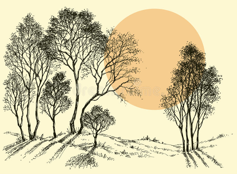 Sonnenuntergang im Wald lizenzfreie abbildung