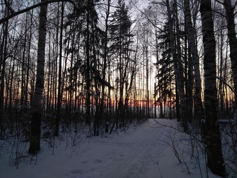 Sonnenuntergang im Winterwald stockfotos