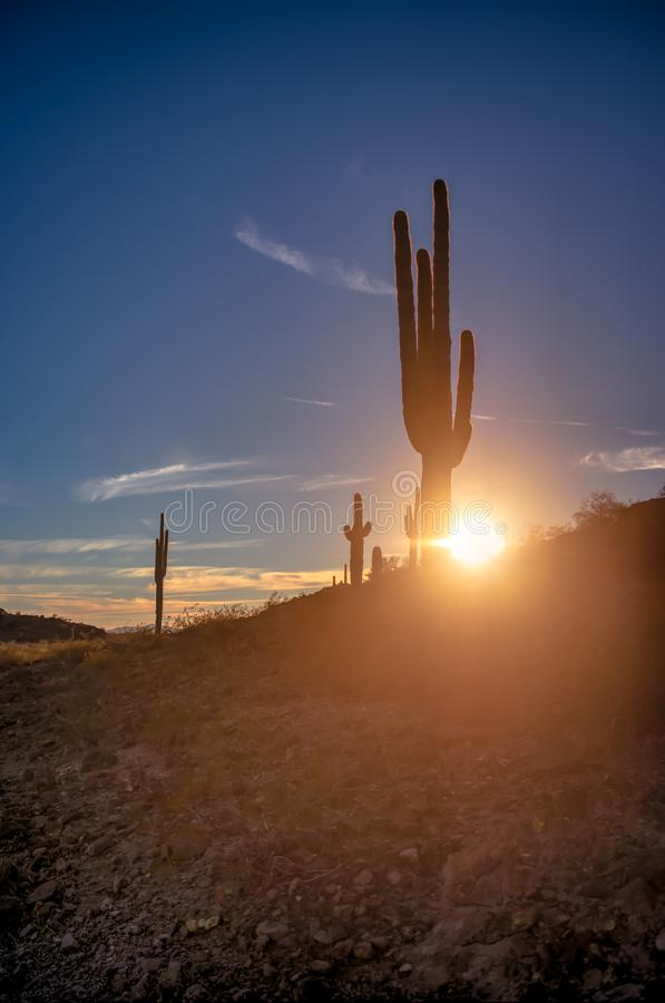 Sonnenuntergang-Kaktus stockfotos