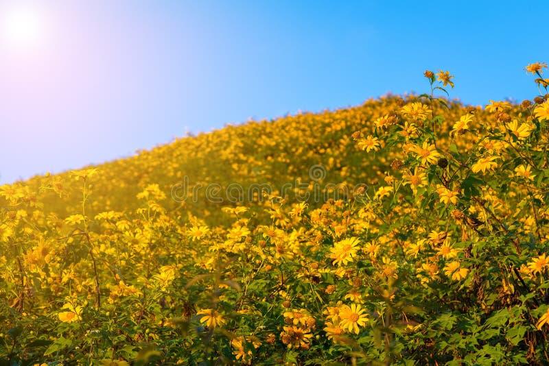 Sonnenuntergang-Landschaftsnaturblume Tung Bua Tong lizenzfreie stockfotografie