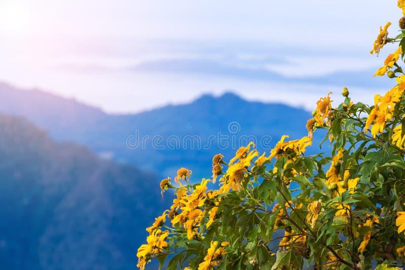 Sonnenuntergang-Landschaftsnaturblume Tung Bua Tong lizenzfreies stockfoto