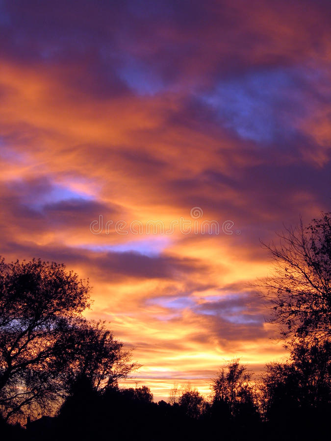 Sonnenuntergang mit Bäumen stockfotografie