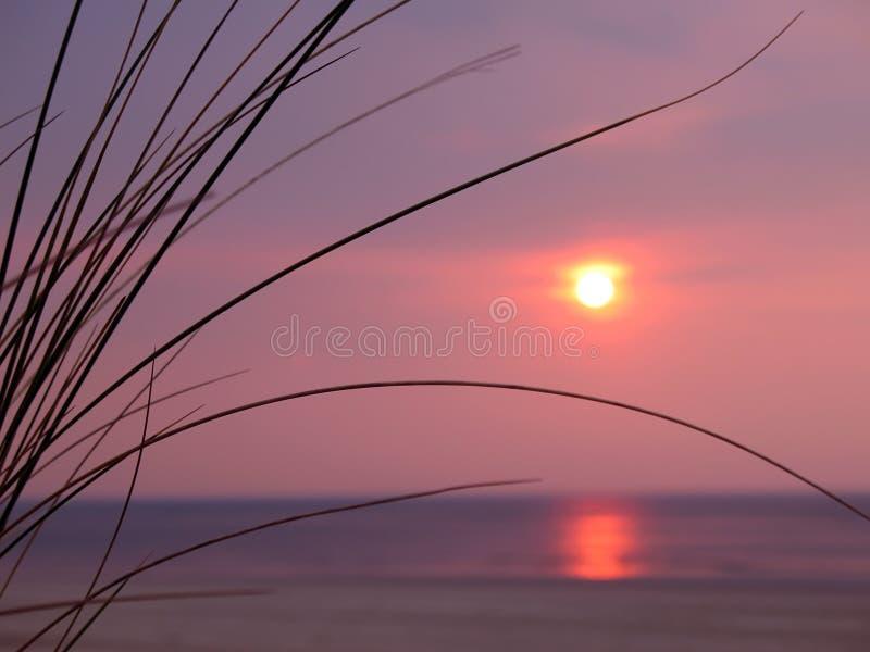 Sonnenuntergang mit Dünegras lizenzfreie stockfotografie