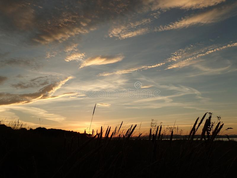 Sonnenuntergang mit Federwolkewolken u. -Himmel mit Schäfchenwolken, mit Strandhaferschattenbildern lizenzfreie stockfotografie