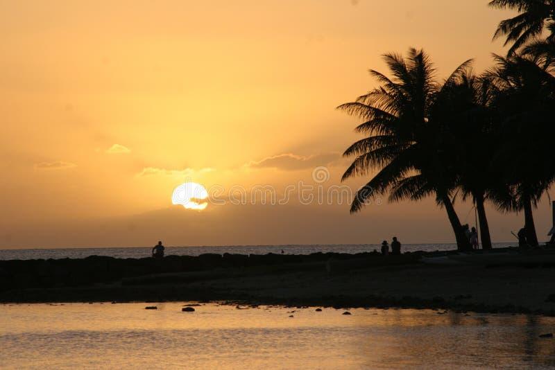 Sonnenuntergang mit Palmen stockfotos