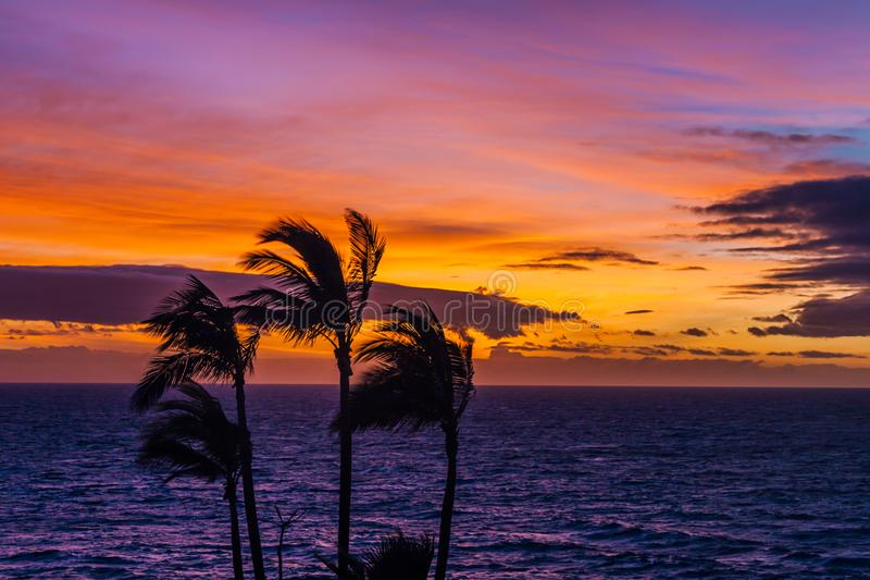 Sonnenuntergang mit Palmen auf dem Norden von Teneriffa in den Kanarischen Inseln stockfotografie