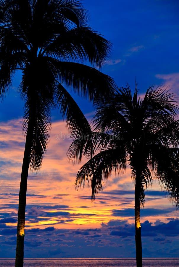 sonnenuntergang mit palmen am strand stockfoto bild von tropisch palme 16659790. Black Bedroom Furniture Sets. Home Design Ideas