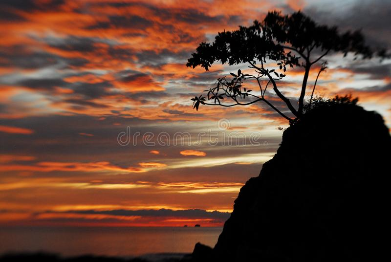 Sonnenuntergang mit Plumeria-Schattenbild lizenzfreie stockfotos
