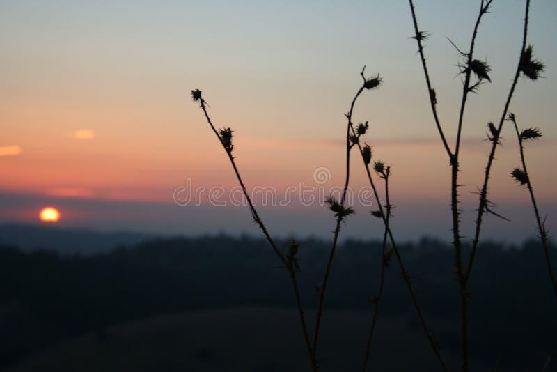 Sonnenuntergang mit Sterndistel im Vordergrund lizenzfreies stockbild