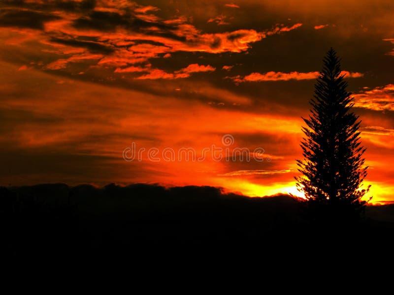 Sonnenuntergang Palmira Colombia und genießen lizenzfreie stockfotos